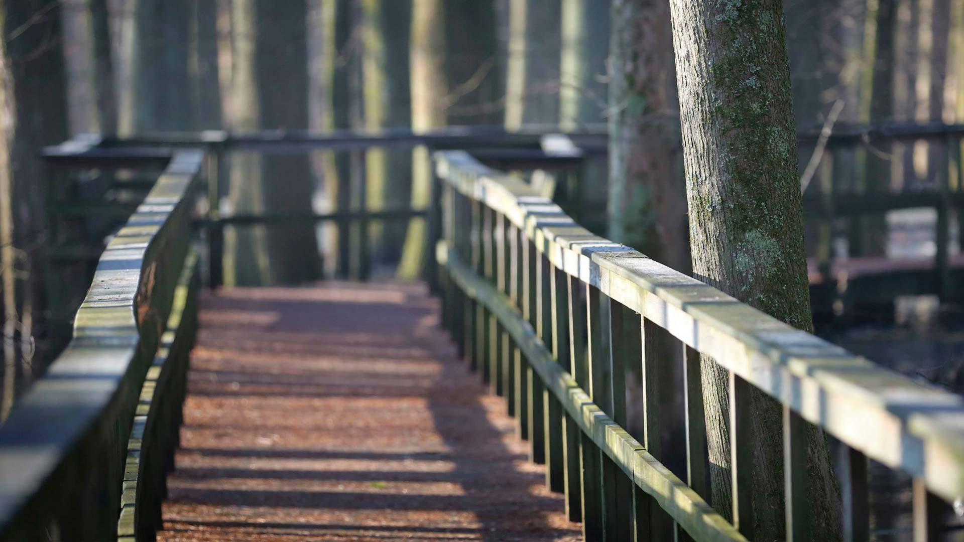 Wheeler Walkway